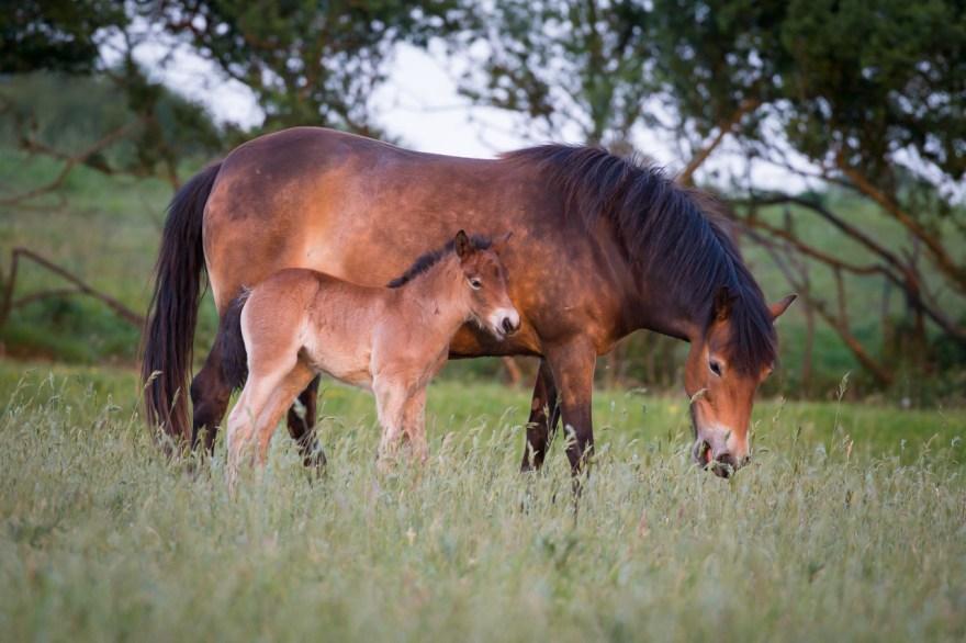 Natuurlijk Paarden fotoblog door fotograaf Harold van Zandvoort van HvZ Fotografie