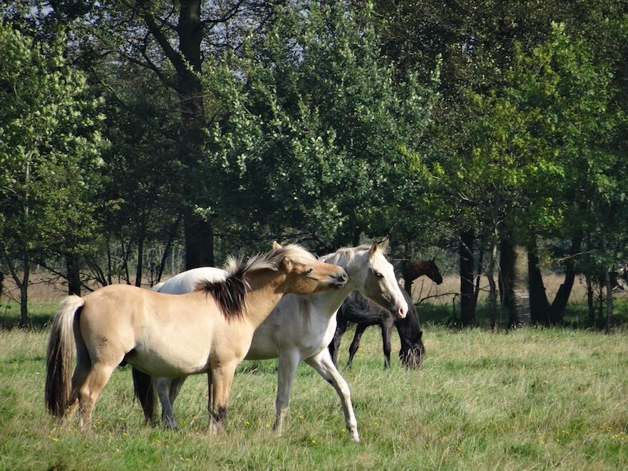 Paardenplant bomen in je paardenwei