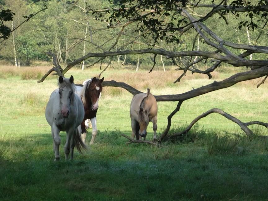 Plezier van een paardenboom: schaduw in de zomer