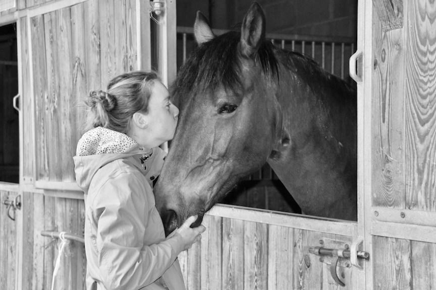 paard in paardenbox niet goed voor paardenwelzijn
