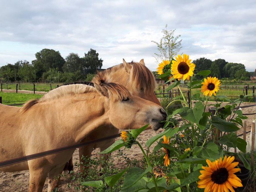 bloemen voor paarden in paddock paradise