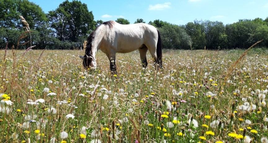 bodemverbetering paardenweide