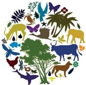 Биоразнообрази: виды, значение, сокращение и сохранение