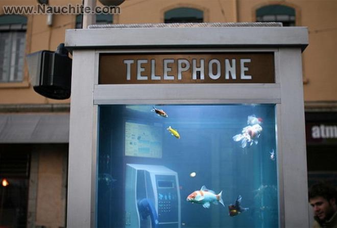 phone_booths_aquariums_b_00.jpg