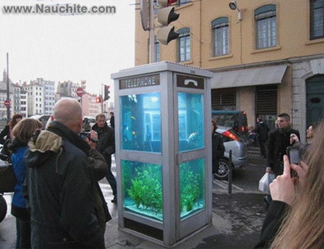phone_booths_aquariums_b_02.jpg