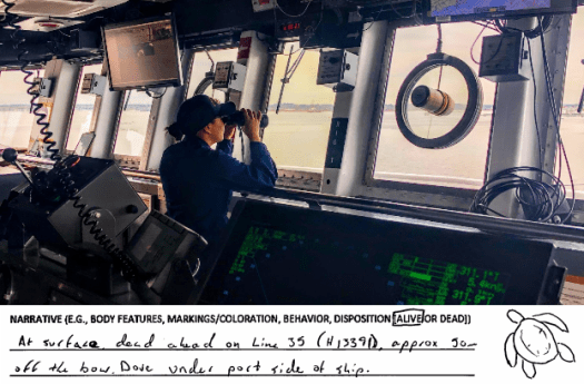 AXO Lt. Cali DeCastro spots turtles from the bridge. An excerpt from an entry in Thomas Jefferson's Sea Turtle Observation log.