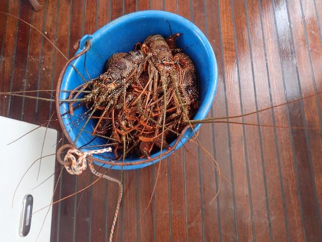 Lobster bucket