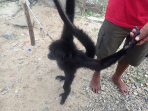 Monkey In Nargana