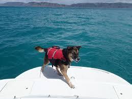 chien naviguer bateau