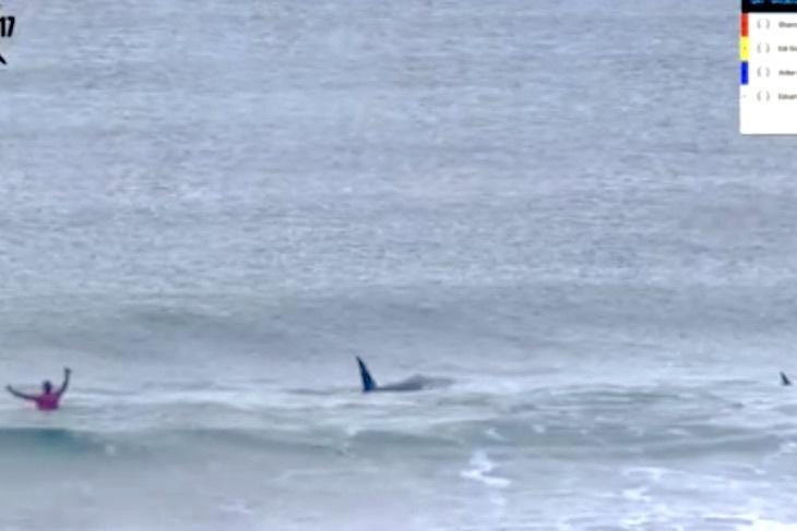 Orcas interrumpen competición de surf en Noruega