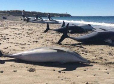 49 delfines varados murieron en Puerto Madryn