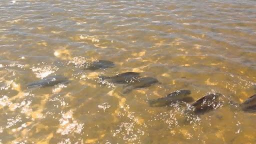 río Paraná peces en la costa