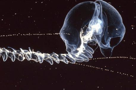 criaturas que viven en la zona más oscura del océano