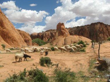 Jayi ranch and sheep pen