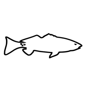 Navarre Kayak Fishing Decal - Redfish