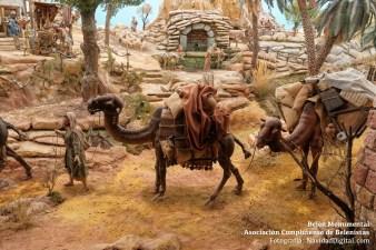 camellos-1819