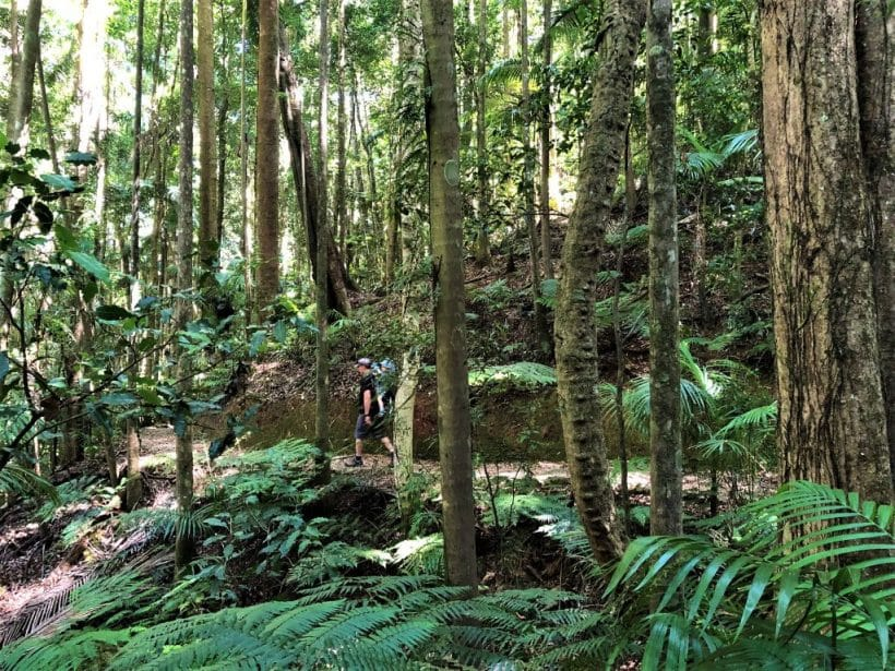 Maiala Bushwalks Greenes Fall Track