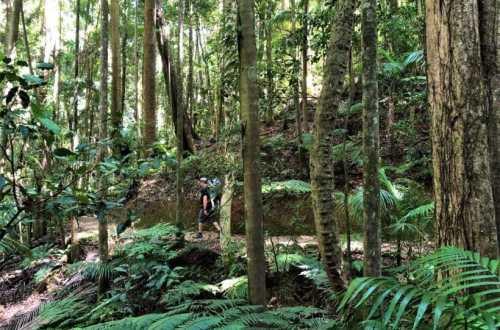 Maiala Bushwalks Greenes Fall Track