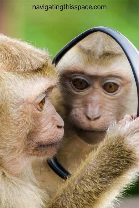 A monkey looking in the mirror indulging in positive self-talk