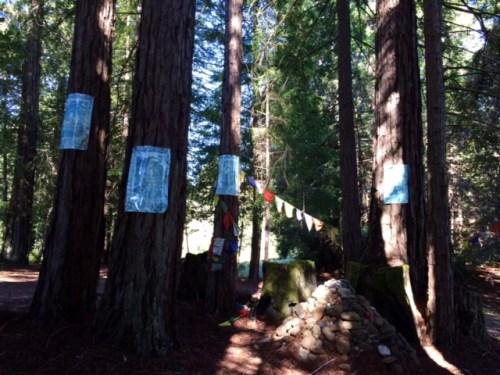 treecircle2