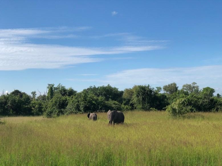 Best African Safaris, South Luangwa National Park
