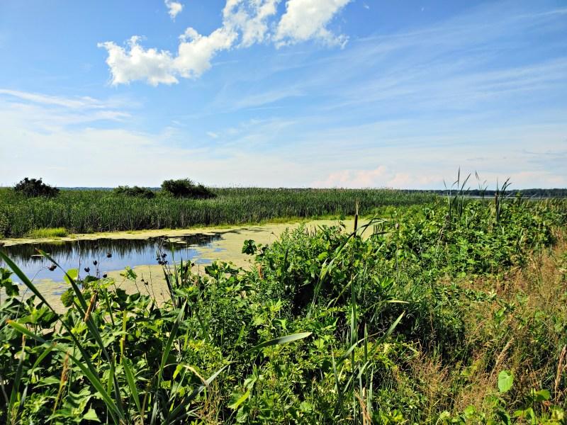 the marsh, Montezuma Wildlife Refuge