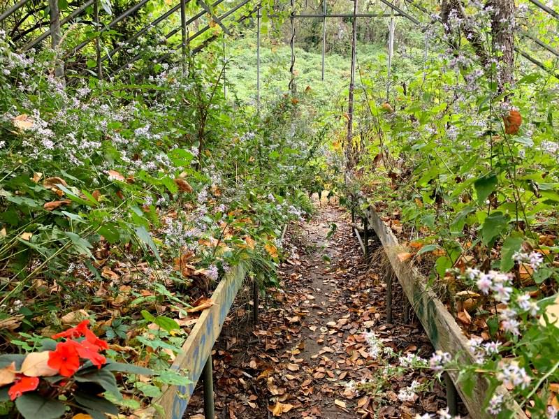 Welwyn Preserve, greenhouses