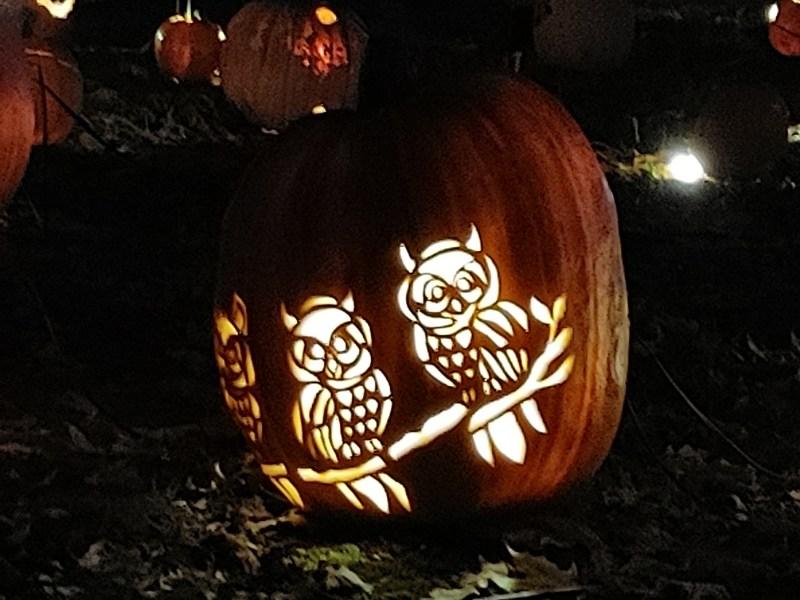 Owls.  Great Jack 'O' Lantern Blaze.