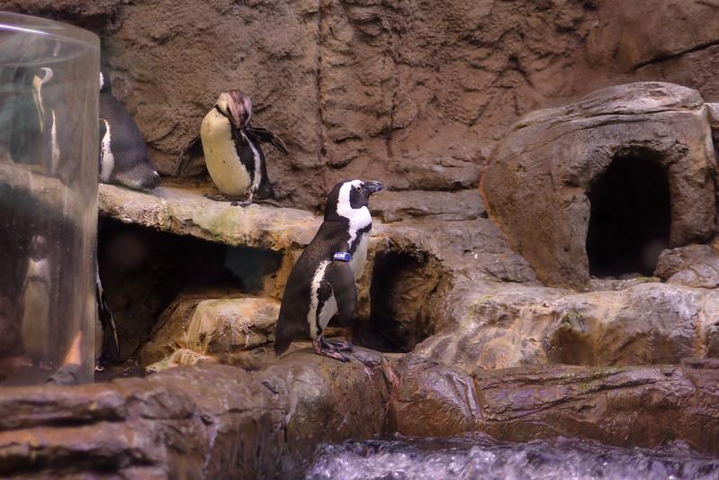 Ripley's Aquarium, cold winter family getaways