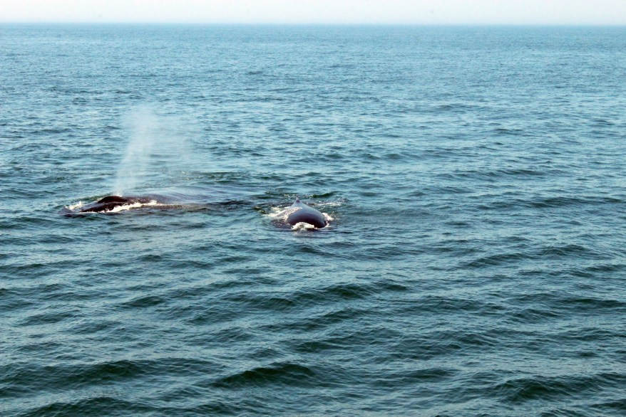 Whale watching in Cape Cod with Kids