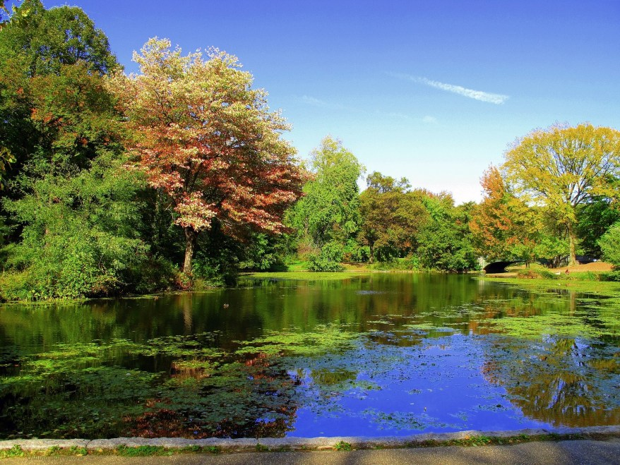 Prospect Park, Brooklyn, best parks in NYC