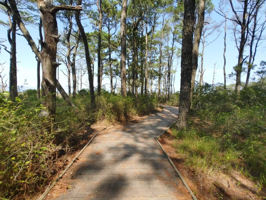 life of the forest boardwalk trail