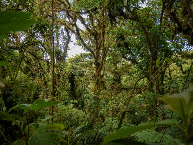 Monteverde Cloud Forest. March 2019