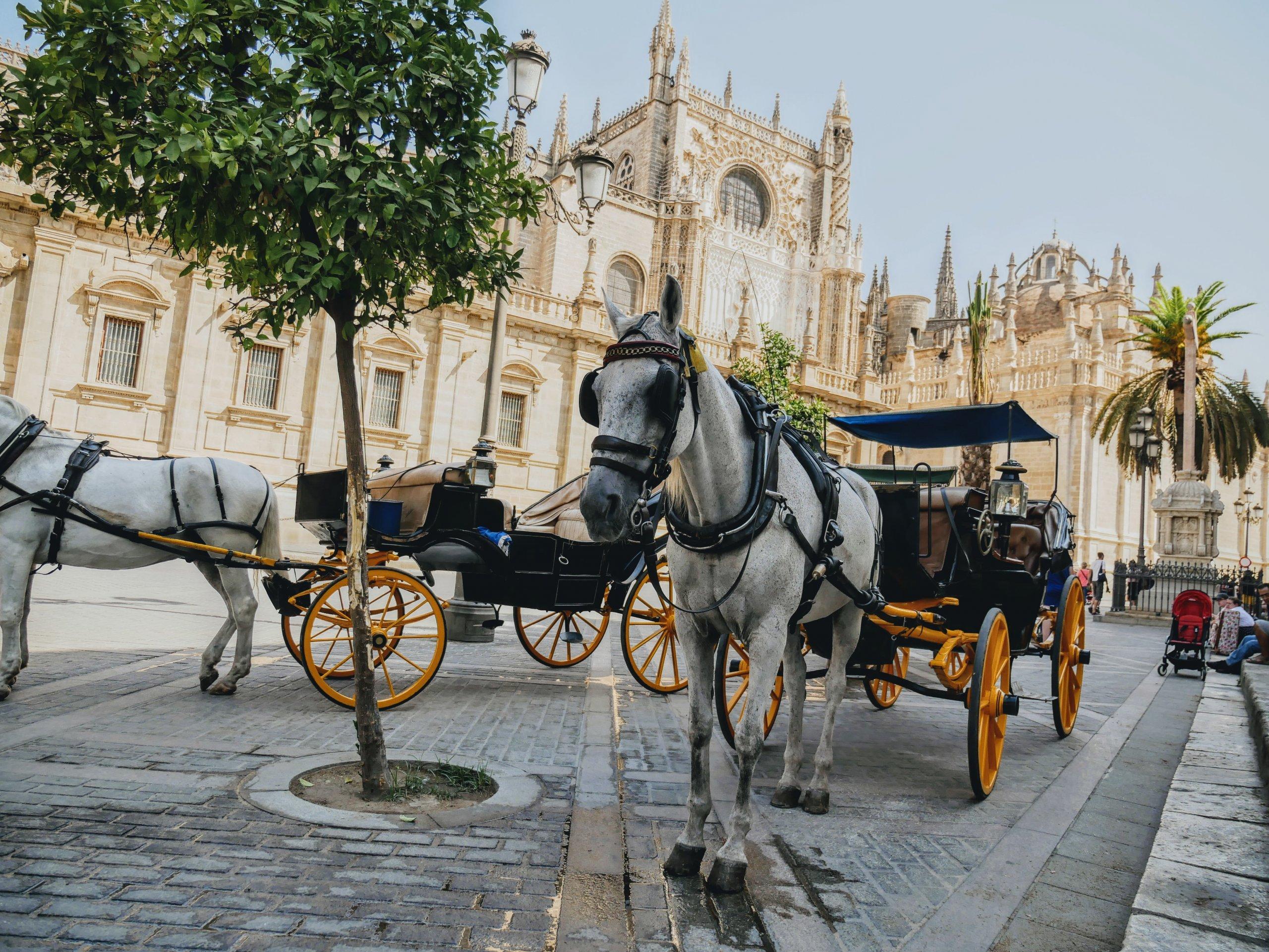 Andalucia, Spain | Travel Film