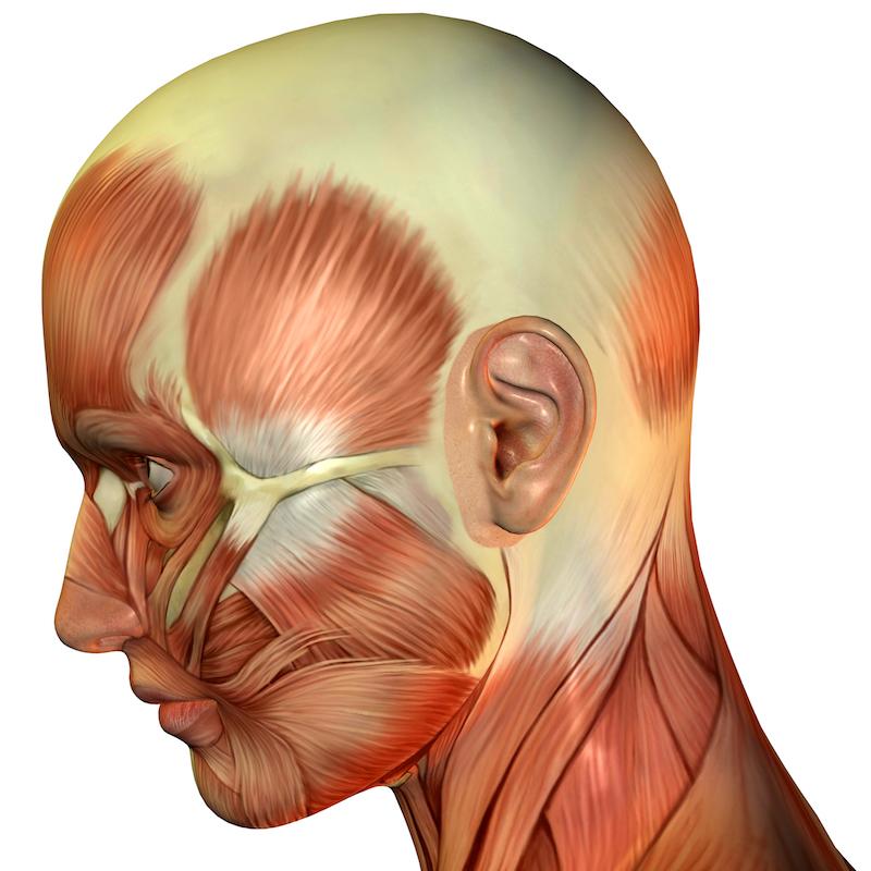 tension headaches anatomy