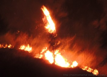 Forest Fire (2)