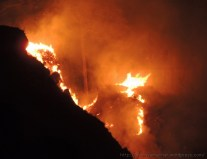 Forest Fire (5)