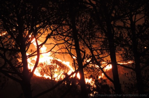 Forest Fire (7)