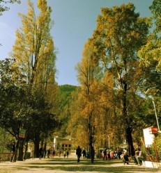 शरद काल में पॉपुलर के पेड़