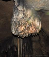 पातालभुवनेश्वर गुफा में ब्रह्म कमल