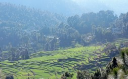 पर्वतीय खेत पांखू गाँव