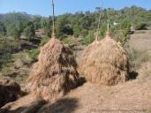 पहाड़ में घास को लम्बे समय के लिए सुरक्षित रखने के लिए बनाये जाने वाले लूटे