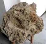 Fossil Stones (1)