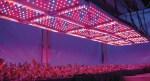 Как подобрать лампы для выращивания растений?