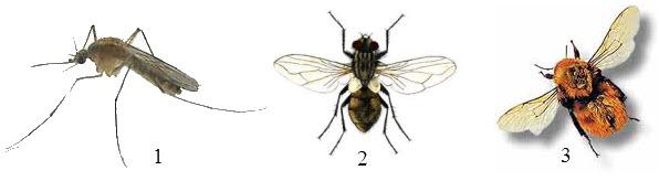 muhi-i-komari-6