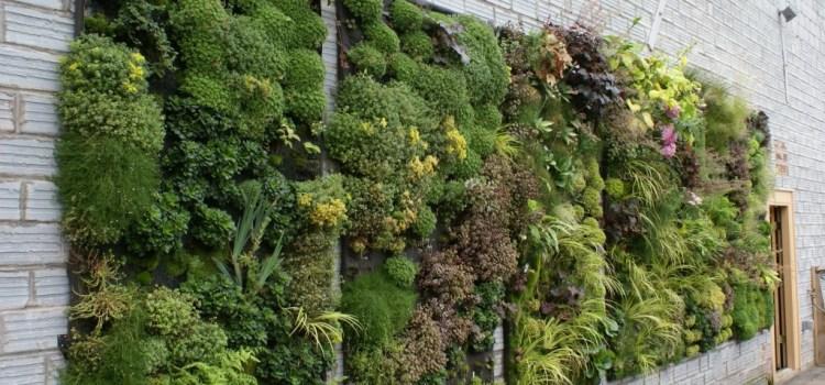 Вертикальные сады: чудо ландшафтного дизайна
