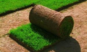 Рулонный газон изготовление