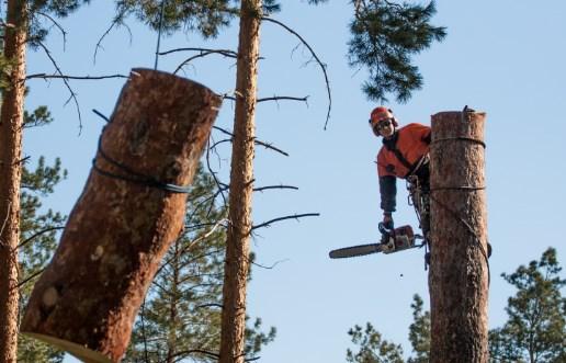 Безопасное удаление деревьев