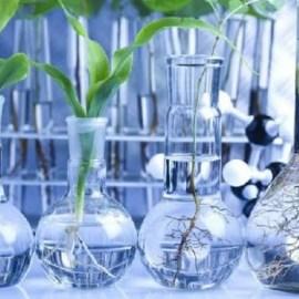 Для чего нужны регуляторы роста растений?