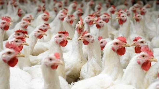 chicken prices
